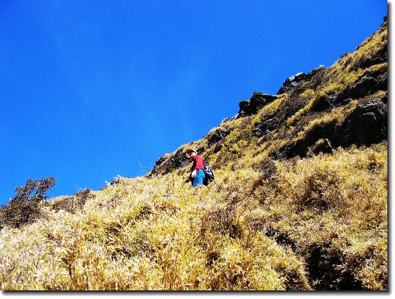 畢祿山攻頂前超陡箭竹林