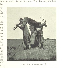 """British Library digitised image from page 313 of """"Under the African Sun: a description of native races in Uganda, sporting adventures, and other experiences ... With 134 illustrations from photographs by the author and two coloured plates"""""""
