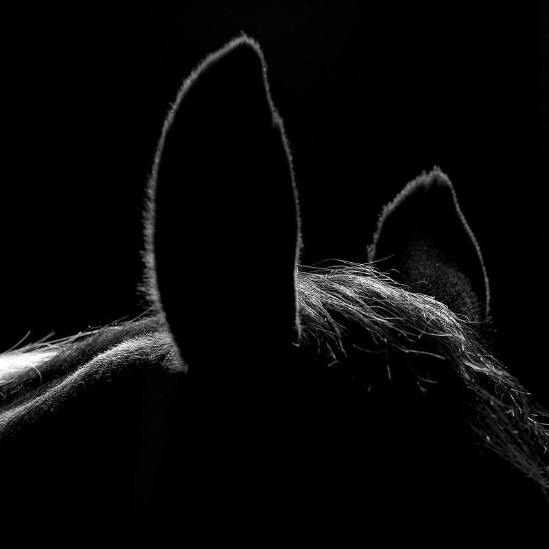 horse_A.P (17)
