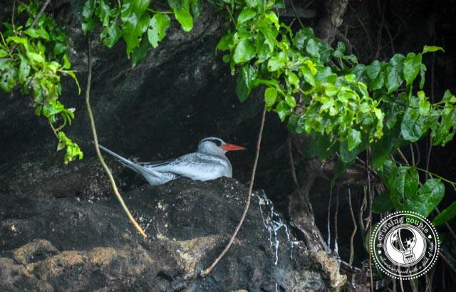 Bird Island_4