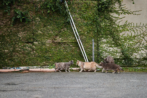 Cat Meeting