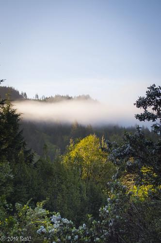 101-365 Morning Mountain Zen