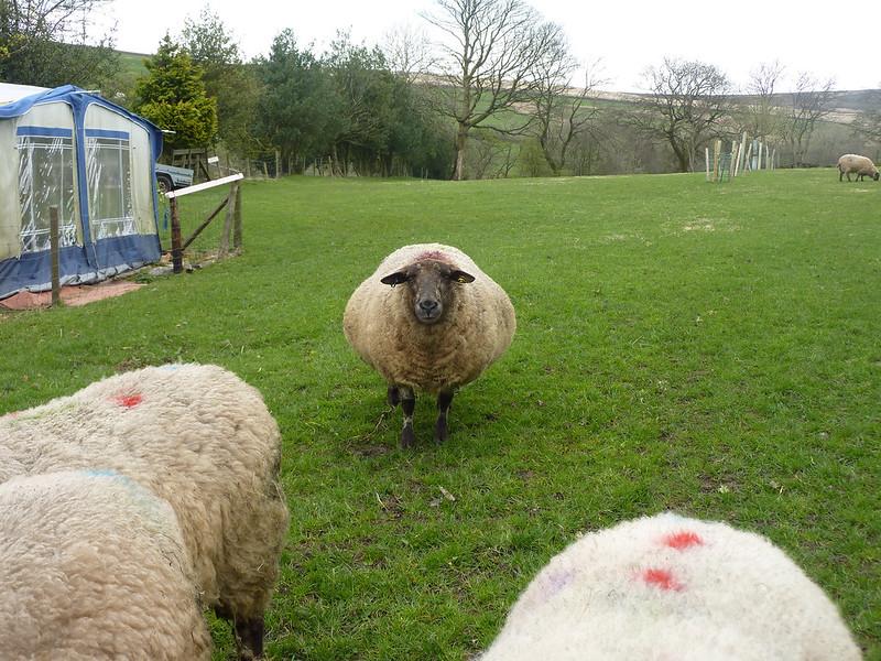 Lambing Update