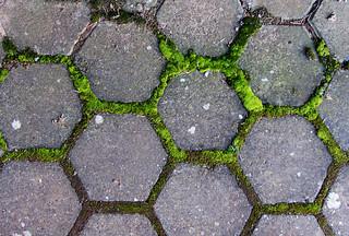 Vibrant moss pattern