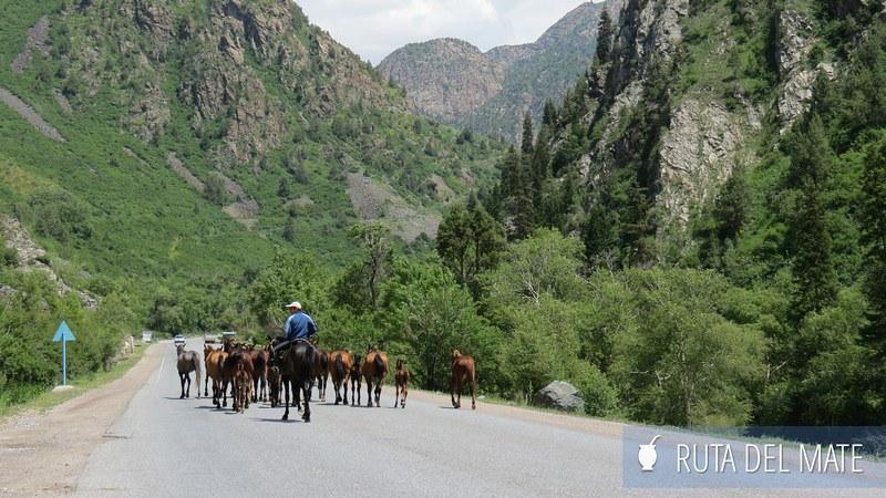 Suusamyr a Jalal Abad Kirguistán (7)