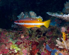 13.05.19 Bootless Bay Dives - Papua New Guinea