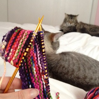 Day140 Knitting and cats! Crazy cat lady in the making! 5.20.13 #jessie365