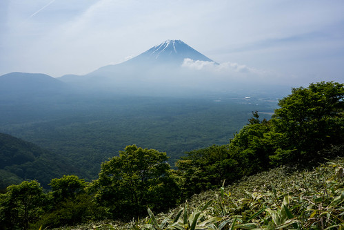 Mt.Fuji and deep forest