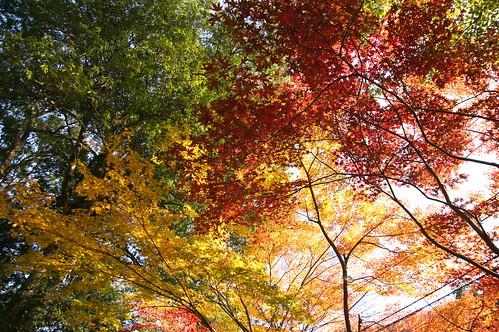 【写真】紅葉 : 金剛院