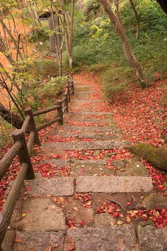 【写真】2012 紅葉 : 笠置山もみじ公園/2020-05-28/IMGP6128