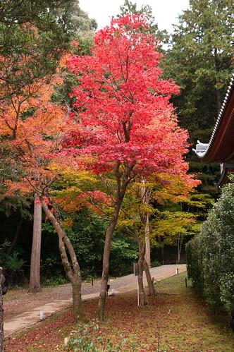【写真】2012 紅葉 : 醍醐寺/2020-08-07/IMGP6854