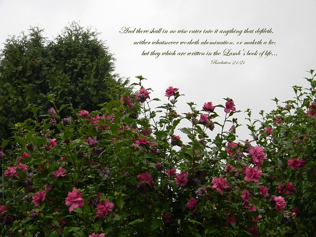 Scripture Lambs Book of Life https://www.flickr.com/groups/verses/pool/?view=lg