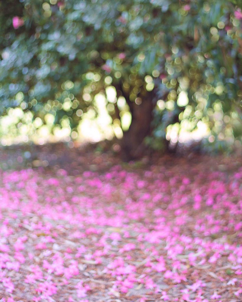 46-365 El jardín
