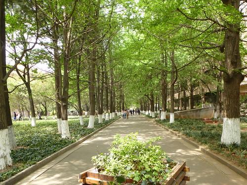 Yunnan13-Kunming-Nord-Université (11)