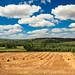 summer field somewhere in Burgundy by mouzhik