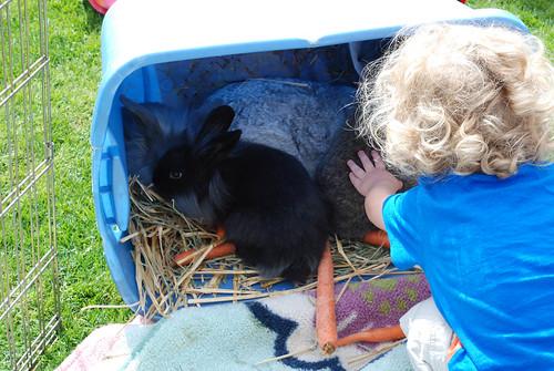 Pile of bunnies