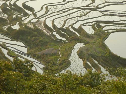 Yunnan13-Yuanyang 1-Duoyishu (90)