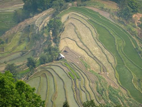 Yunnan13-Yuanyang 23-Laohuzui (4)