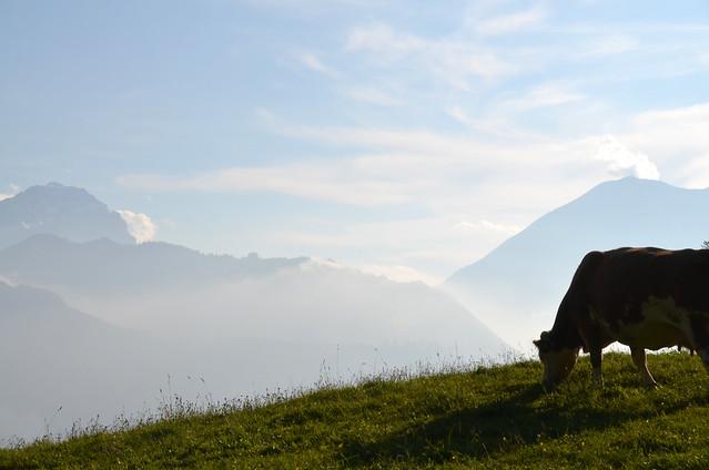 Vaca de Milka en Suiza