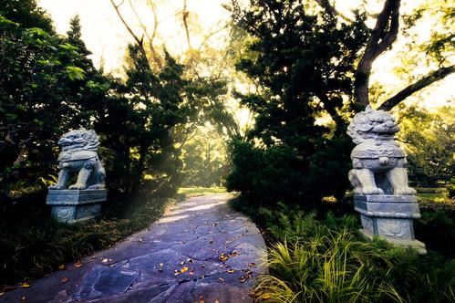 china trees sculpture sun sunlight nature garden landscape ancient warm path stlouis missouri chinesegarden botanicalgarden missouribotanicalgardens missouribotanicalgarden stlouisbotanicalgarden