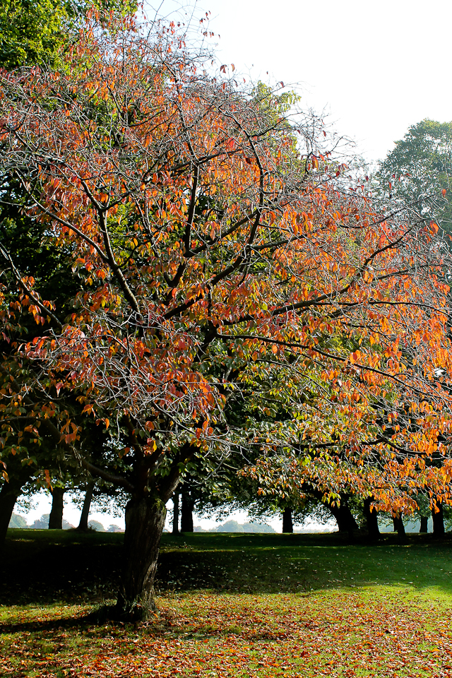 Autumnal glitter