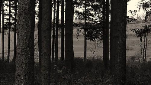 light france tree nature monochrome sepia digital forest french outdoors lumix spring frankreich burgundy panasonic frankrijk bourgogne campagne francia arbre priroda morvan francais fz50 drvo yonne svetlost mladjenovic