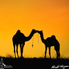 Love is in the Dessert... by nimitnigam