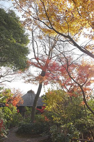 【写真】2013 紅葉 : 西行堂/2020-09-05/IMGP4750