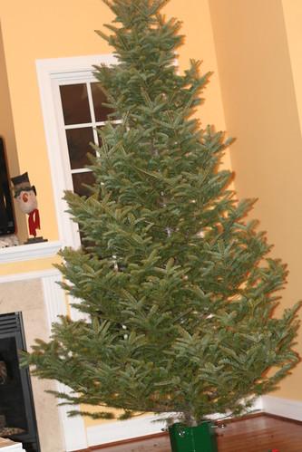 Christmas Tree 2013 (25)