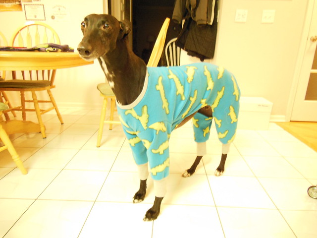 Greyhound Pajamas Hot Off The Press Sewing Machine