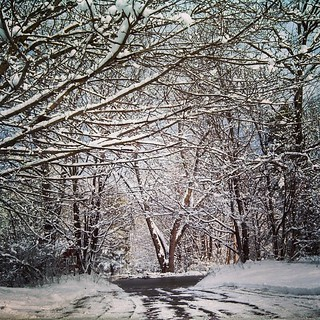I prefer this shot in the fall with pretty leaves, but this ain't bad... #snow #trees #driveway #newengland #winterwonderland