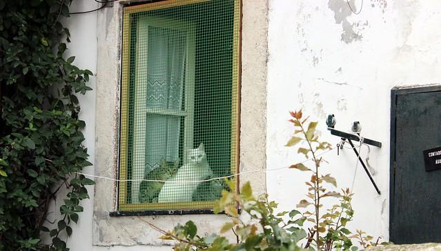 kissat ikkunalaudalla lissabonissa