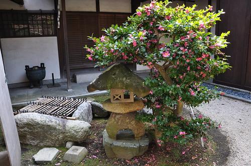 Garden of Keiunkan, stone lantern and camellia