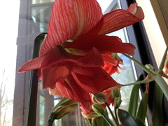 A Mighty Office Flower