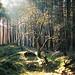 the shining tree by mitošinkovie