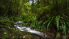 Lamington National Park by PiotrHalka