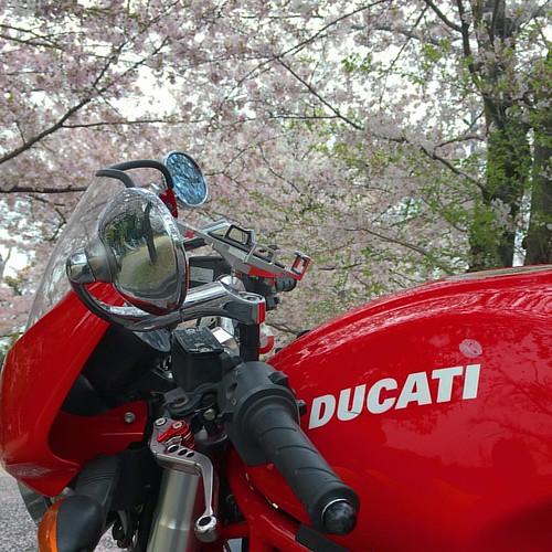 #japanese #sakura #sakurablossom #ducati #ducatimonster