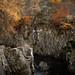 Autumn Trees, Glen Lyon by S i m o n . M a y s o n