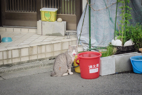 Today's Cat@2013-05-21