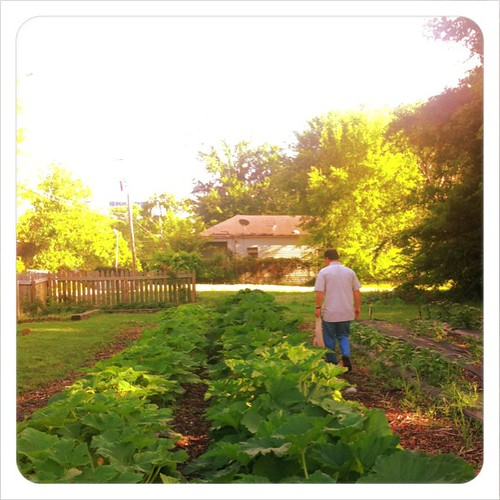 Veggie picking date with my hubby. #lifeatwewillgo #communitygarden #squash #urbanfarming #urbangardening #creativedate