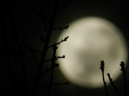 ramas en luna