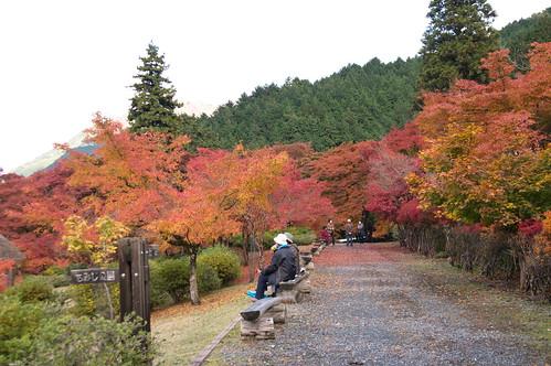【写真】紅葉 : 高源寺