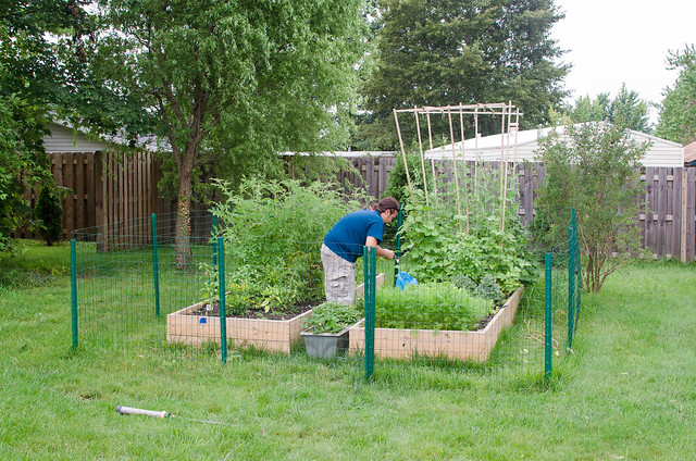 20130720-Backyard-Garden-2752