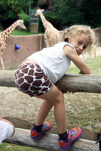 Auttie-on-fence-giraffes