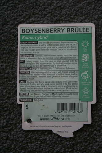 2013-08-06 - Farmlet - 12 - Boysenberry variety Brulee packet back