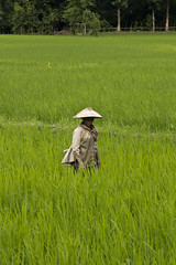 Rice farmer.