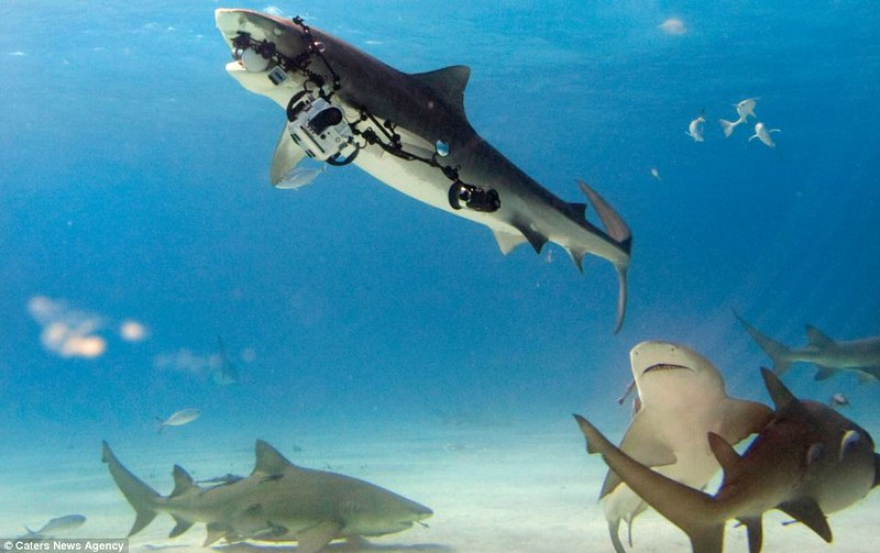 Tiger Shark STEALS diver's $18,000 camera rig