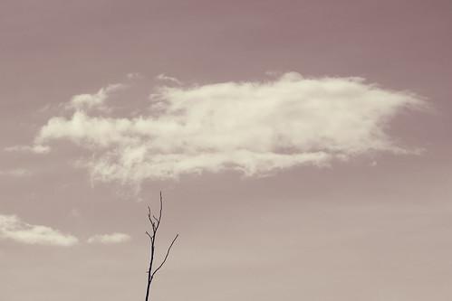 reach to the sky