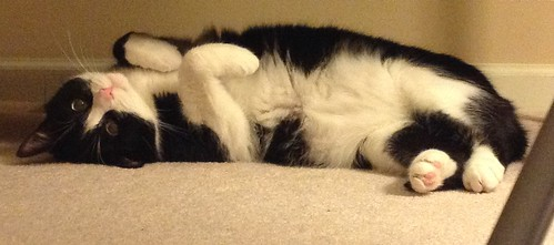 Tuxedo Cat 14
