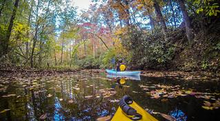 Exploring Carrick Creek
